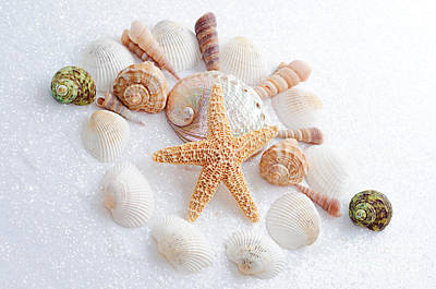 Photograph - North Carolina Sea Shells by Andee Design