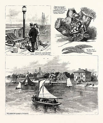 Baltimore Drawing - North Carolina The Seaside School Of The Johns Hopkins by American School