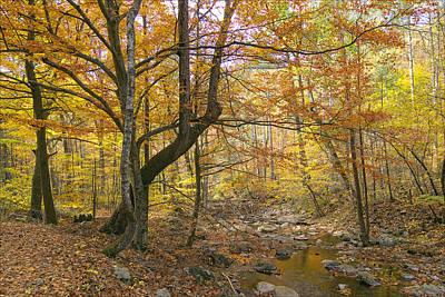 North Creek Autumn - Mid Afternoon - 04043 Art Print