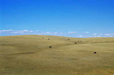 Photograph - North Dakota Prairie by Michael Moschogianis