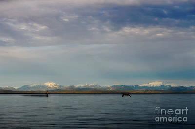Photograph - North Island by Gail Bridger