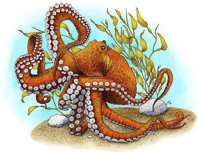 Photograph - North Pacific Giant Octopus by Roger Hall