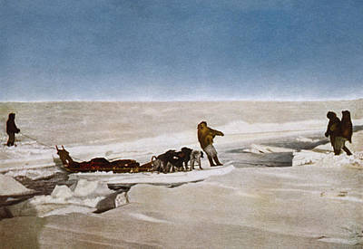 Arctic Dog Painting - North Pole Dog Sled, C1910 by Granger