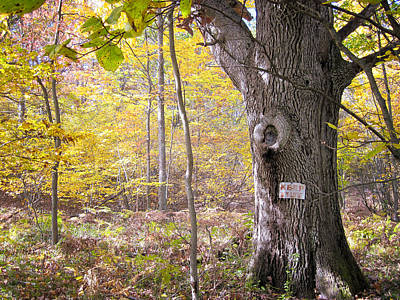 Photograph - North Woods Guardian by Mary Lee Dereske