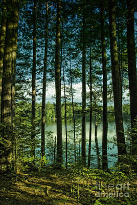 North Woods Lake Art Print