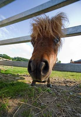Fish-eye Look Photograph - North Yorkshire, England  Horse Looking by John Short