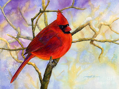 Royalty-Free and Rights-Managed Images - Northern Cardinal by Hailey E Herrera