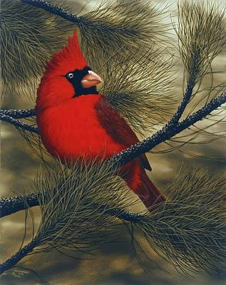 Cardinal Painting - Northern Cardinal by Rick Bainbridge