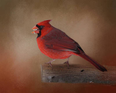 Photograph - Northern Cardinal  by TnBackroadsPhotos