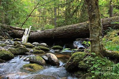 Photograph - Northern Creek by Tim Rice