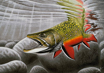 Trout Drawing - Northern Exposure by Nick Laferriere