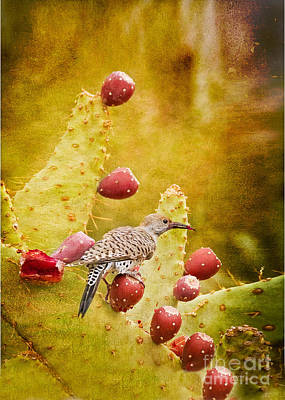 Photograph - Northern Flicker by Marianne Jensen