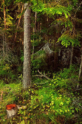 Northern Forest 1 Art Print by Jenny Rainbow