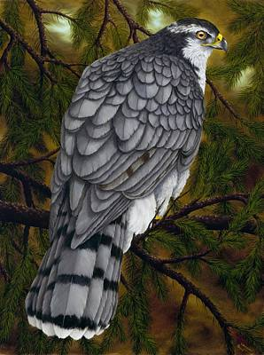 Hawk Painting - Northern Goshawk by Rick Bainbridge