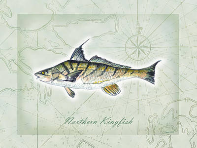 Painting - Northern Kingfish by Clara Sue Beym