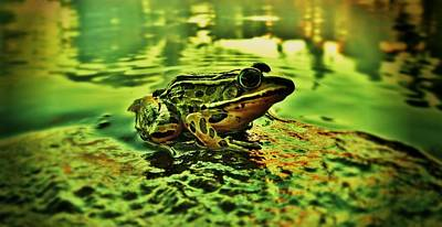 Photograph - Northern Leopard Frog by Sarah Pemberton