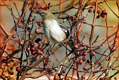Photograph - Northern Mockingbird by Elizabeth Winter