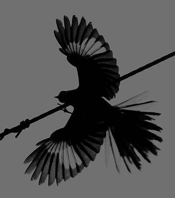 Art Print featuring the photograph Northern Mockingbird by Leticia Latocki