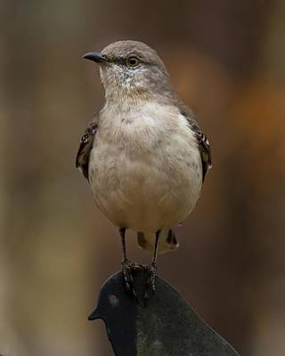 Art Print featuring the photograph Northern Mockingbird by Robert L Jackson