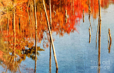 Photograph - Northern October by Charline Xia