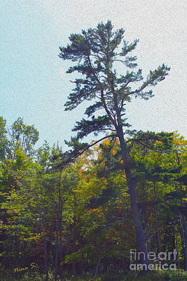 Photograph - Northern Pine Painting by Nina Silver