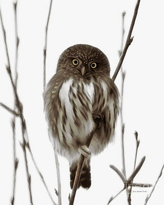 Beve Brown-clark Painting - Northern Pygmy Owl - Little One by Beve Brown-Clark Photography