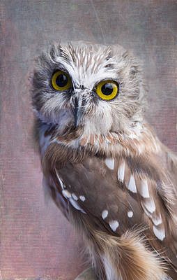 Photograph - Northern Saw-whet Owl by Angie Vogel