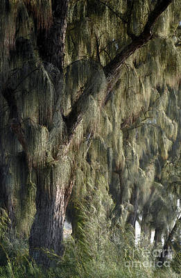 Photograph - Northshore Trees by Gina Savage