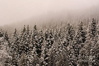 Photograph - Northwest Winter by Tikvah's Hope
