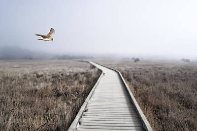 Photograph - Nortrhern Hawk Searches For Dinner By The Ocean  by Abram House