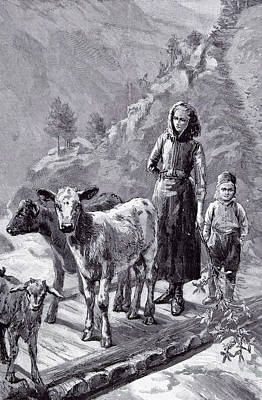 Norway The Family Cows Art Print