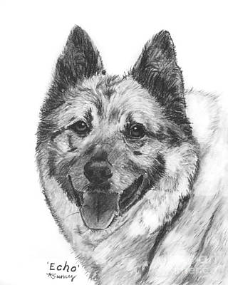 Drawing - Norwegian Elkhound Sketch by Kate Sumners