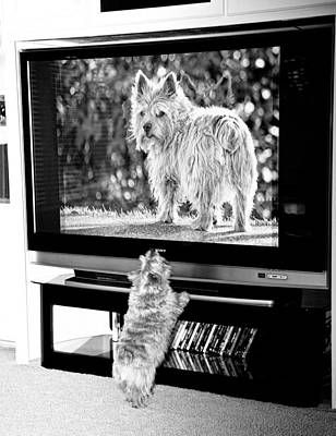 Pets Art Digital Art - Norwich Terrier Bigger Than Life by Susan Stone