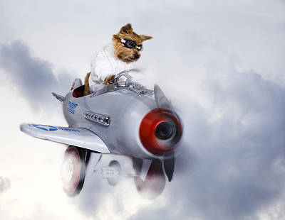 Digital Art - Norwich Terrier Flies Through The Clouds by Susan Stone