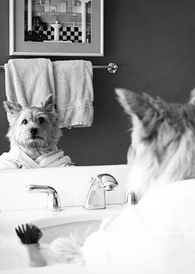 Digital Art - Norwich Terrier In The Mirror by Susan Stone