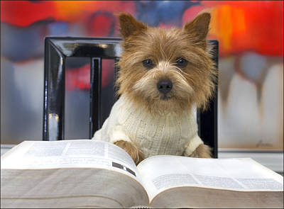 Digital Art - Norwich Terrier Reads A Book by Susan Stone