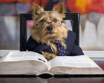 Digital Art - Norwich Terrier Teacher by Susan Stone