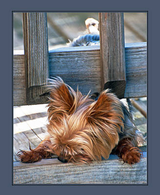 Photograph - Nose Down And Bottom Up by Donna Proctor