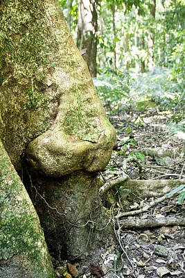 Photograph - Nose Tree In Gwandanaland by Debbie Cundy