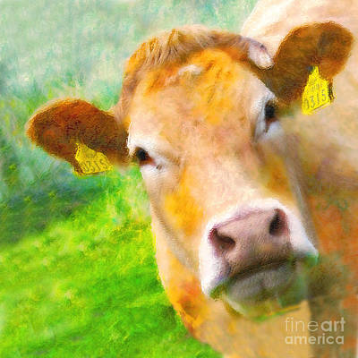 Photograph - Nosey Cow by Jo Collins