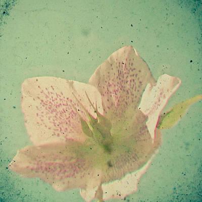 Cassia Photograph - Nostalgia by Cassia Beck