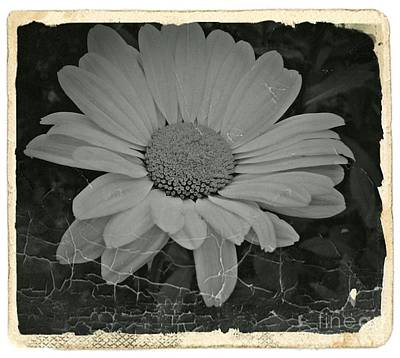 Aster Mixed Media - Nostalgic Daisy Bw 1 by Chalet Roome-Rigdon