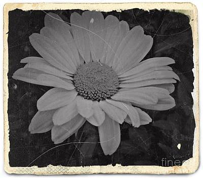 Aster Mixed Media - Nostalgic Daisy Bw 2 by Chalet Roome-Rigdon