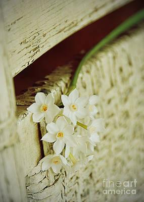 Photograph - Nostalgic Paper Whites by Carla Parris