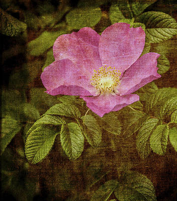 Photograph - Nostalgic Rose by Karen Stephenson