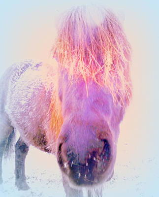 Photograph - I'm The Famous Winter Nosy Spirit But I Don't Care  by Hilde Widerberg