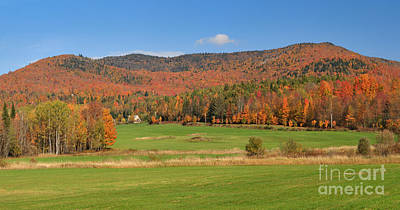 Maple Photograph - Not A Bad Place To Build A House by Charles Kozierok