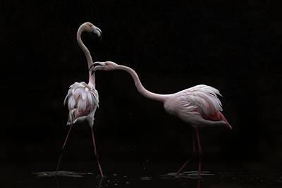 Dark Pink Photograph - Not All Is Rosy by Martine Benezech