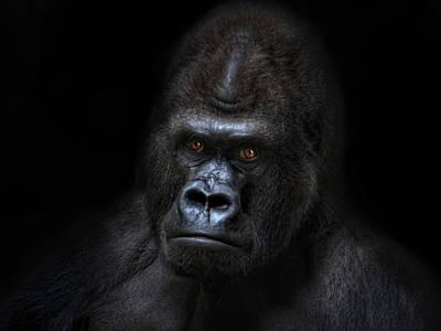 Gorilla Photograph - Not Amused by Joachim G Pinkawa