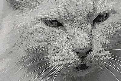 Photograph - Not Amused  by Sheri McLeroy